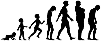 The Aging Process in Human Beings