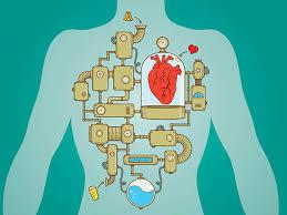 Pathophysiology and Leadership