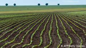 Soybean Farming and Grazing in Brasil